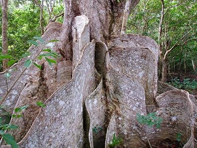 ノースLC石垣島200911 048.jpg