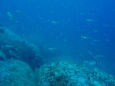 ビヤノ岬海底遺跡20090921 050.jpg